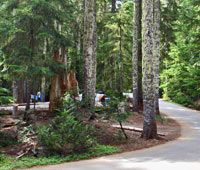 White River Campground in Mt. Rainier National Park $12/night, No reservations