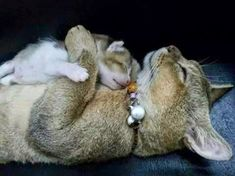 Mother's love.