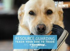 Resource Guarding: Teach Your Dog to Trade Brought to you by the AKC GoodDog! Helpline – the AKC's 7-day-a-week training support service By Hilarie Erb, AKC GoodDog! Helpline Trainer Is your dog possessive when you want to take something from them that they shouldn't have? Do they growl