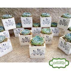 Echeveria imbricata succulents wedding souvenirs on wooden pots :)