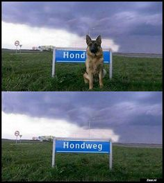 Hond |