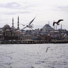 . Istanbul, Turkey . The great Bosporus . #travelawesome #bucketlist #travelgram #traveling #travel #istanbul #turkey #türkiye #bosporus #birds #water #mosque #cami
