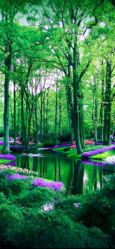 Keukenhof flower garden in Lisse, Netherlands • photo: caithness155 on deviantart
