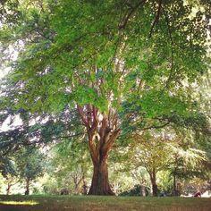 Dublin Ireland, Something To Do, Park, Plants, Summer, Instagram, Summer Time, Parks, Plant