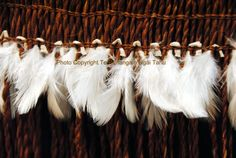 Introducing Maori Lifestyles: Textiles at a Hui Flax Weaving, Weaving Art, Weaving Patterns, Hand Weaving, Feather Cape, Flax Flowers, Native Wears, Maori Designs, Maori Art