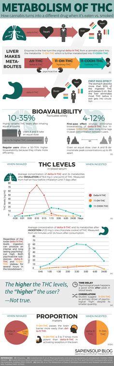 Infographic-Human-Metabolism-THC