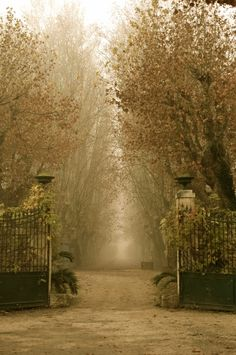The open gates invite us to explore the secrets in the mist...in Arles, France the secrets are romantic!