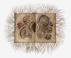 Simply Creative: Book Sculptures by Barbara Wildenboer