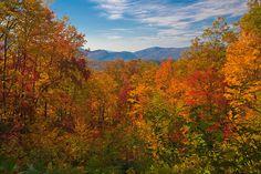 Autumn Blaze, Great Smoky Mountains, PhotosbyFlood. Incredible color.