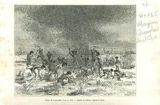 Locusts Aborigène Indigenous Queensland Australia Australie GRAVURE PRINT 1889 | eBay