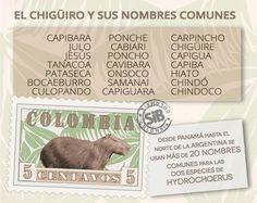 Nombres comunes de los chigüiros en Latinoamérica