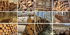 I love the design of woodpiles!
