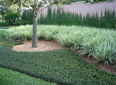 When choosing ground cover for a hillside garden, you need to use the same criteria as you do for flat land. There are several good ground cover plants for a hillside garden. House Landscape, Landscape Design, Garden Design, Jasmine Plant, Jasmine Vine, Garden Shrubs, Shade Garden, Hillside Garden, Garden Plants