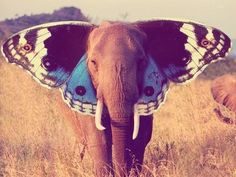 A fantastic Photoshop image manipulation, combining images of an elephant and a butterfly. I love how the artist has given the entire picture a vintage feel.