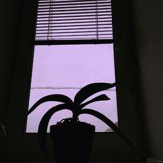 #pink #window #selfart