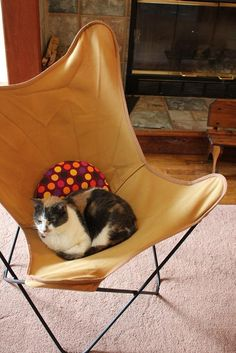 lovely*retro*house: More Thrifting: Vintage BKF Butterfly Chair for Kitty?
