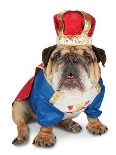 Zelda Canine King Pet Costume http://keeplookingbusy.com/itemDetails.aspx?id=B008CNCSU2