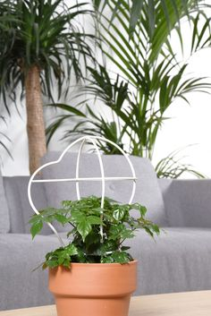OUTLINE - Design by Daniel Rous - Plant frames are the physical outcome of a series of hand drawings on paper. Evolving from paper, they become tangible in the space of the home. The shape of the structures compliments the organic growth of the plant within.