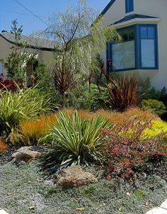 Drought tolerant landscape with many year-round colors