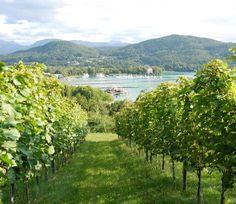 Meine Stadt - Weingarten Klagenfurt