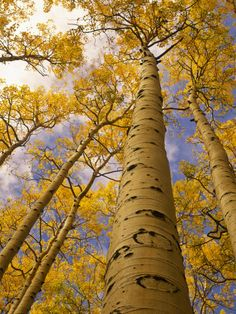 Colorado - Aspen