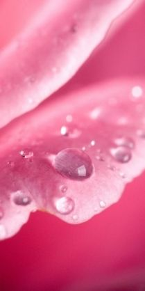 Pink, Perfectly Touched by Rain