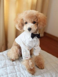 Pet Accessories for Wedding