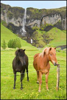 Icelandic Horses I've been right in that spot......... No ponies hmmmmmmmmm........photoshop but still cute