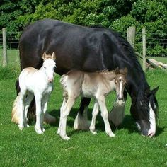 Mom here comes that mean dog again!! [GM Images] #Horses #Saddles #MySaddleTrader