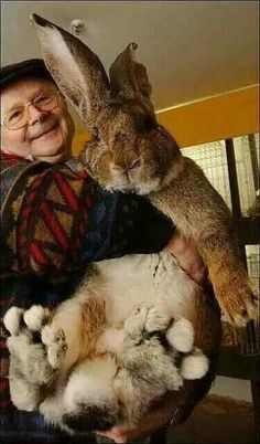 Huge Rabbit what carrots are they feeding him with?
