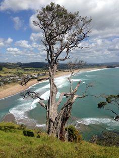 North Pataua beach NZ New Zealand, Beach, Water, Outdoor, Gripe Water, Outdoors, The Beach, Beaches, Outdoor Games
