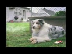 15 FUNNY DOG ADS!!  MUST SEE DOG COMMERCIALS!! (Long Version) HA HA HA HA HA HA HA! (okay... so I didn't laugh at the drop kick - partly because I saw it coming.... and I shouldn't have laughed at the granny one... but I didn't see it coming!)