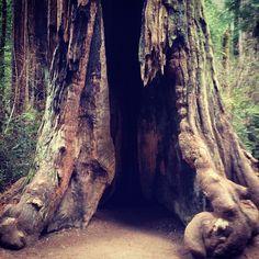 Big Basin Redwoods State Park in Boulder Creek, CA