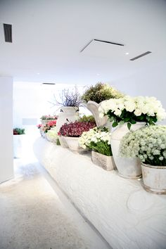 "Talk about a ""sweet"" bouquet :) Flower Show, Flower Bar, White Flowers, Beautiful Flowers, House Beautiful, Tropical Flowers, Potted Flowers, Hibiscus Flowers, Cactus Flower"