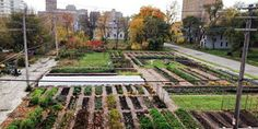 Vote for Detroit to get a community garden!