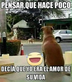 Best Ideas For Memes Mexicanos Groseros Nuevos Funny Spanish Memes, Spanish Humor, Funny Memes, Hilarious, Funny Shit, Funny Stuff, Mexican Humor, Memes In Real Life, Humor Mexicano