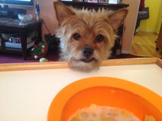 Oh, please can I have some???