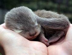 Baby otter.  I. Love. Him.