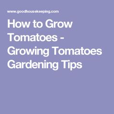 How to Grow Tomatoes - Growing Tomatoes Gardening Tips