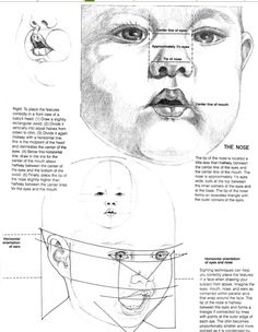 Baby face Proportions by Judy Clifford
