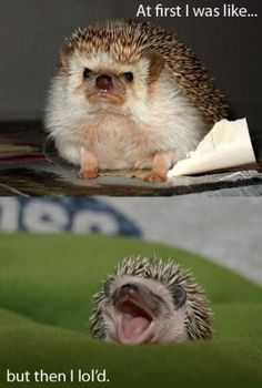 This Hedgehog brings it to the point!