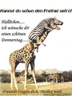 ich wünsche euch  einen  super tollen  donnerstag Giraffe, Camel, Humor, Funny, Animals, Monat, German, Teaching, Friends