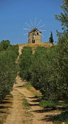 Windmill in the Olive Grove.. Greece (by Lars- Kahnt)