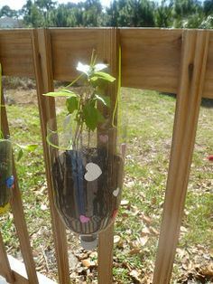 Pop bottle planters.  The kids can see the root system.  Fun way to add color along the deck railing!