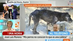 Remove the dogs kept by José Luis Moreno and have them transferred to a protective shelter in Madrid to be properly cared for and treated!