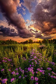 """""""Into the West"""" Wisconsin Horizons by Phil Koch. Lives in Milwaukee, Wisconsin, USA. http://phil-koch.artistwebsites.com https://www.facebook.com/MyHorizons"""