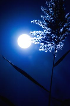 Full moon ... powerful blue