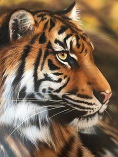 Airbrush Tiger Art from Airbrush Art School. We offer lessons on how to airbrush any wildlife art. Tiger Art, Painting Studio, Airbrush Art, Wildlife Art, Custom Paint, Art School, Gallery, Artwork, Work Of Art