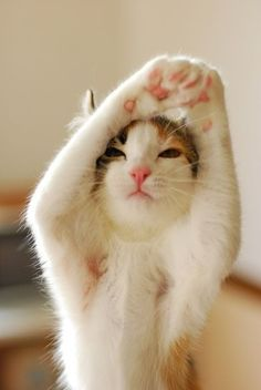 A cat doing its morning stretches.