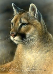Puma  - Zeichnung